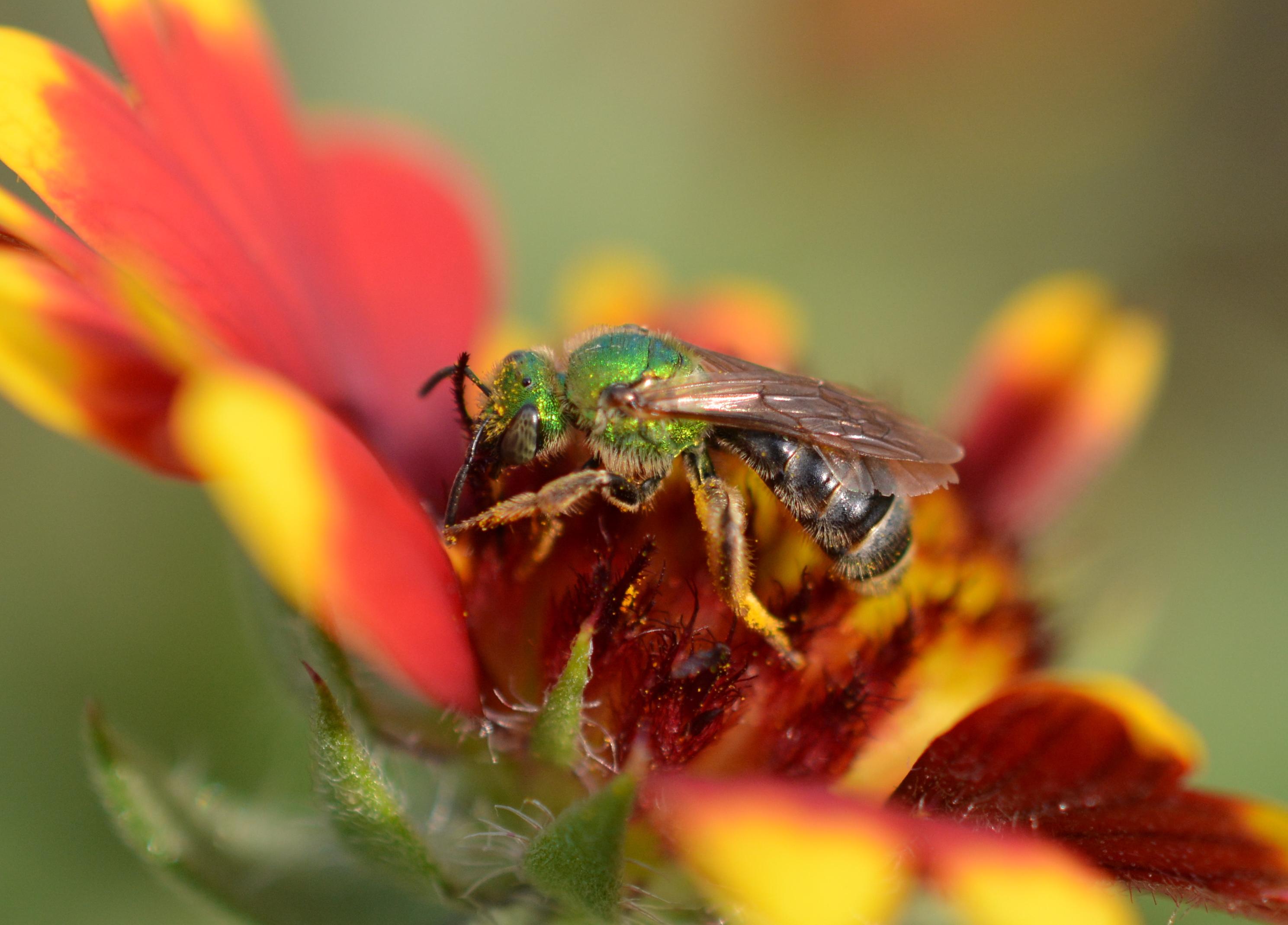Formal Garden of the Vanderbilts – Native Beeology