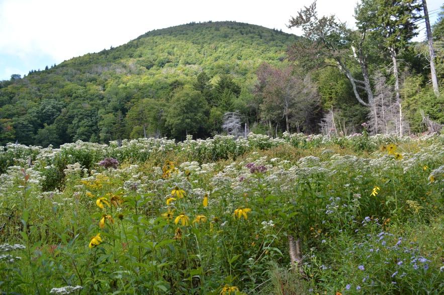 Beaver Meadow in Full Bloom
