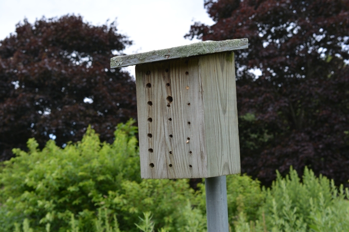 Solitary Bee House to Encourage Native Bees